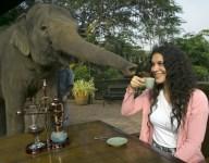 Morning Eye Opener: Elephant Dung Coffee