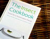 Insect Ingredients: A Question of Texture