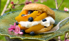 Peach and Blueberry Shortcake