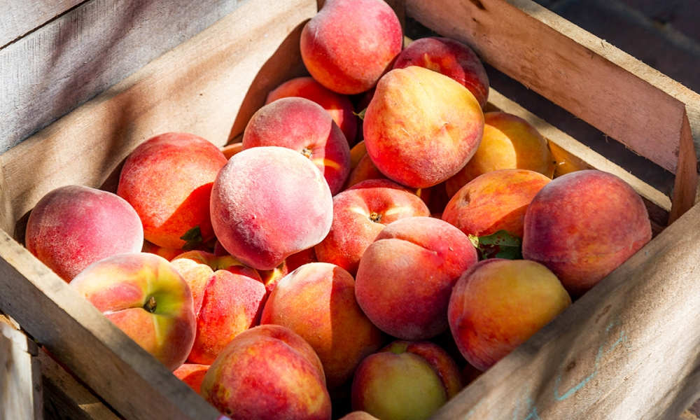 A crate of freshly picked peaches, perfect for making peach preserves.