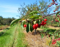 The Seaquist Orchards of Door County